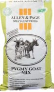 Pygmy Goat Mix